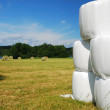 Gathered field with straw bales packaged — Stock Photo