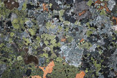 Surface stone with many-coloured moss — Stock Photo