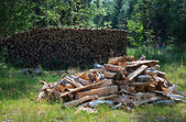 Green yard with woodstack. — Stock Photo