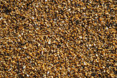 Close-up of silica wet beach. — Stock Photo