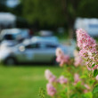 Stock Photo: Auto camp on green camping site