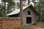 Registro capannone con legna da ardere in foresta. — Foto Stock