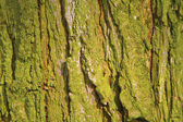 Green bark background — Stock Photo