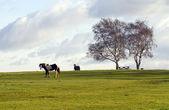 лошади на хит — Стоковое фото