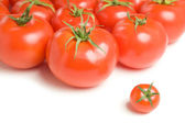 Group of tomatoes-17 — Stock Photo