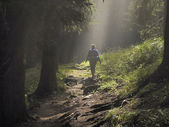 Chemin dans la forêt enchantée — Photo