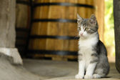 Kitten sitting next to wine barrel — Stock Photo