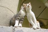 """""""Lean on Me"""" Kitten Friends — Stock Photo"""