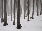 Mystical winter woodland — Stock Photo