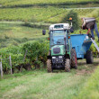Tractor in vineyard — Stock Photo