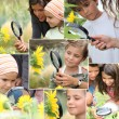 Montage of kids examining sunflowers — Stock Photo