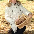 Senior woman picking mushrooms — Stock fotografie