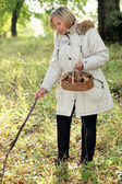 Woman looking for mushrooms — Stock Photo