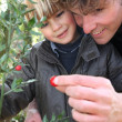 Little boy and father picking berries of a plant — Stock Photo