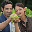Winemakers with grapes - Stock Photo