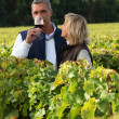 Winegrowers in the vineyard with a glass of wine — Stock Photo #10278780