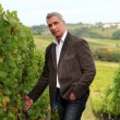 Stock Photo: Winegrower in vineyard