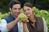 Winemakers with grapes — Stock Photo