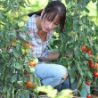 Stock Photo: Womwith tomato plants
