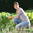 Stock Photo: Womin garden