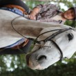 Stock Photo: Landscape image of teenager riding horse