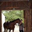 Stock Photo: Horseriding center