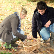 Couple picking chestnuts — Stock Photo #10410735