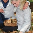 Couple picking mushrooms - Stock Photo