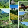 Стоковое фото: Various countryside images