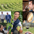 Montage of life on a vineyard — Stockfoto