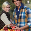 Stock Photo: Young couple picking apples