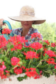 Woman in a straw hat watering geraniums — Stock Photo