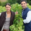 Stock Photo: Smiling couple working in a vineyard