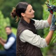 Stock Photo: Couple pruning grape vines