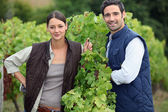 Smiling couple working in a vineyard — Stock Photo