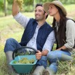 Farmer and wife sat with basket of grapes — Stock Photo #8048857