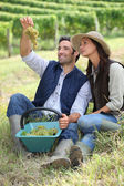 Farmer and wife sat with basket of grapes — Stock Photo