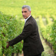 Smart man in a vineyard — Stock Photo #8053605