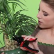 Woman pruning a houseplant — Stock Photo #8056465