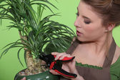 Woman pruning a houseplant — Stock Photo