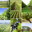 Images of a vineyard — Foto Stock