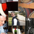 Wine industry process — Stock Photo