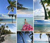 Mozaika z tropického ostrova — Stock fotografie