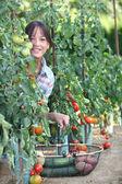 Kvinna plocka färska tomater och andra grönsaker — Stockfoto