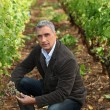 Stock Photo: Farmer kneeling in vineyard