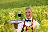 服务员站在葡萄园与葡萄酒杯托盘 — 图库照片