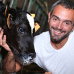 A farmer caressing a calf slobbering milk — Stock Photo