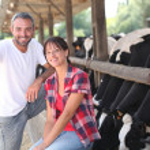 Cow farmers — Stock Photo