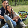 Couple having a picnic in a vineyard — Stock Photo