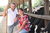 Cow farmers — Stock Photo